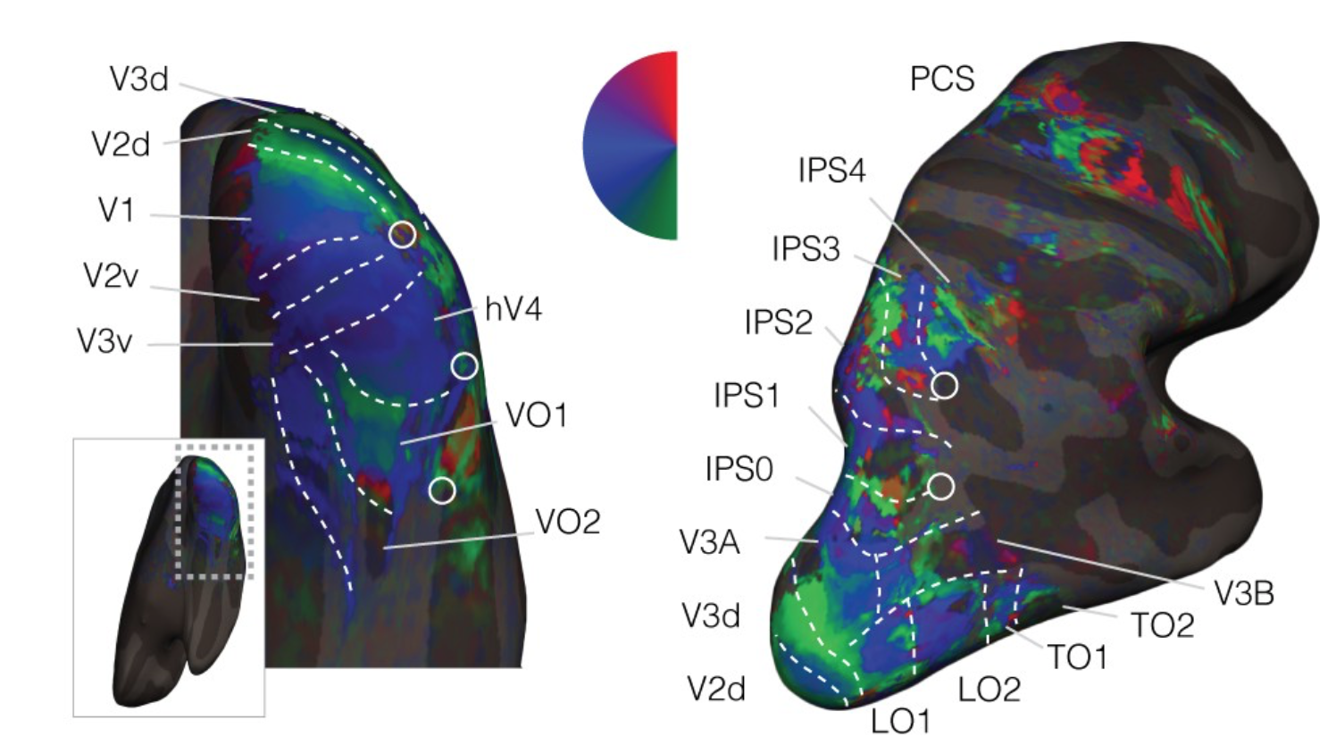 eLife paper on attentional warping of visual space published